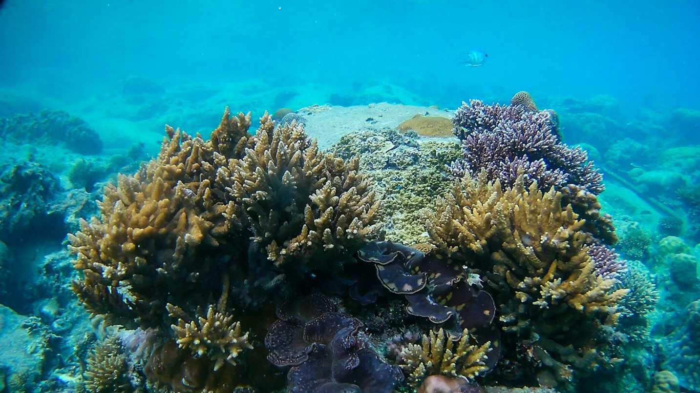 corais-ilhas-perhentian