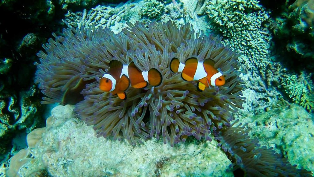 nemo-ilhas-perhetian