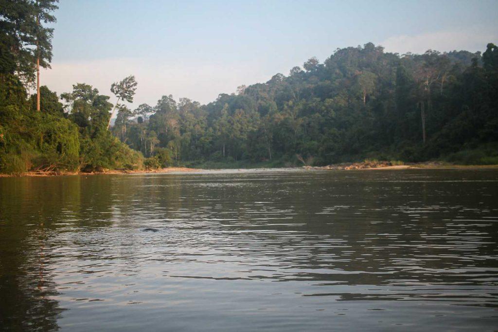 taman-negara-malásia