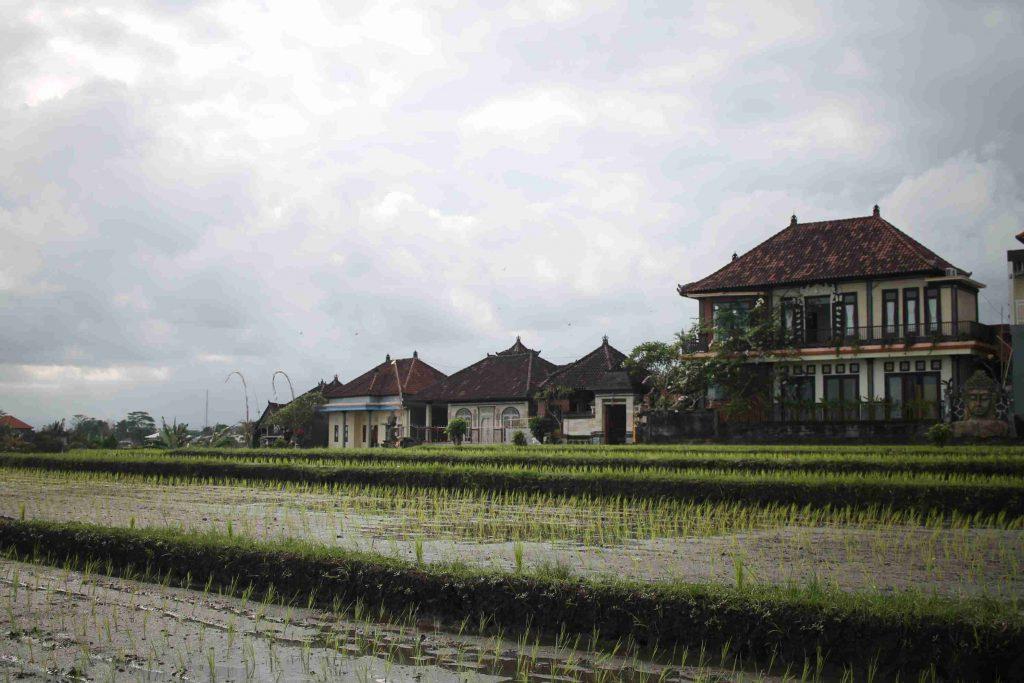 arrozais