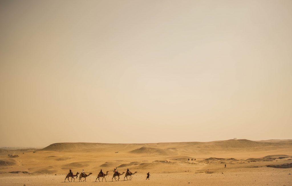 deserto-camelos