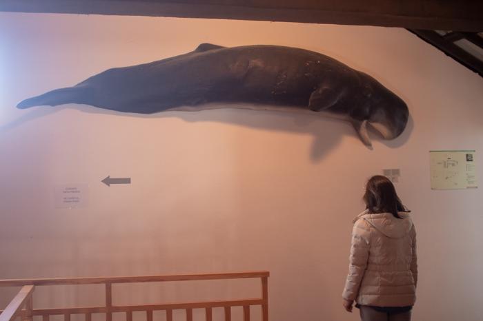 Ana a observar imagem de baleia na Fábrica d Boqueirão na Ilha das Flores