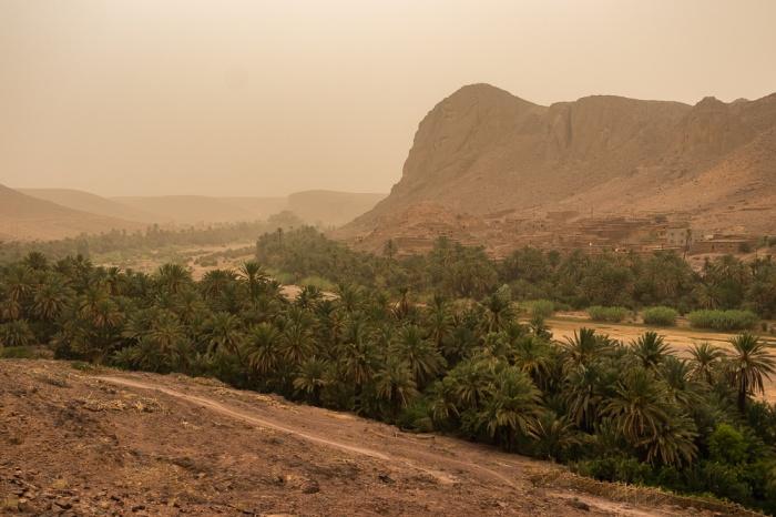 Vista sobre o palmeiral do Oásis de Fint