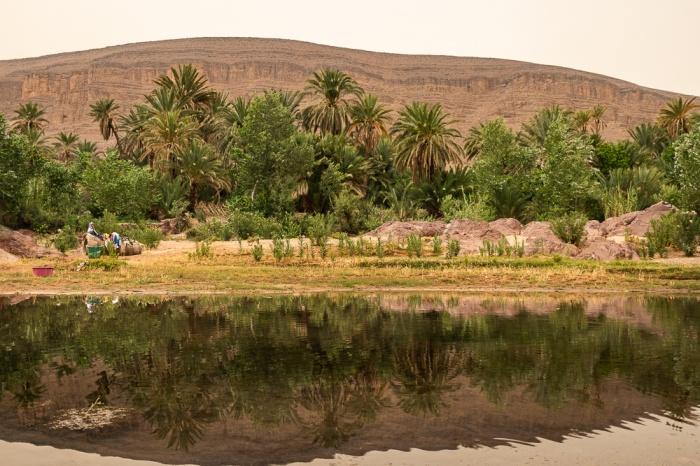 Reflexo das palmeiras no rio em Fint